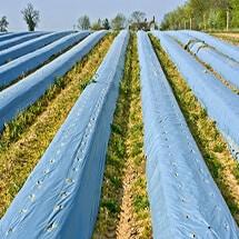 Màng phủ nông nghiệp chất lượng cao, giá rẻ toàn quốc